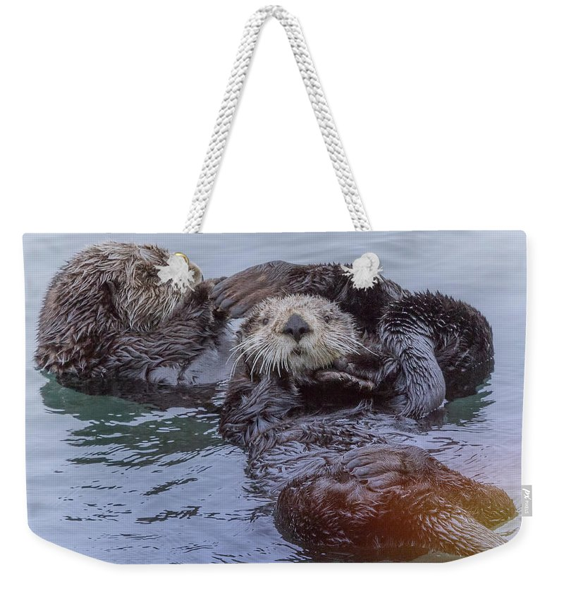 Sea Otter Weekender Tote Bag featuring the photograph Sea Otter Love Mates by Leslie Reagan - Joy To The Wild Photos