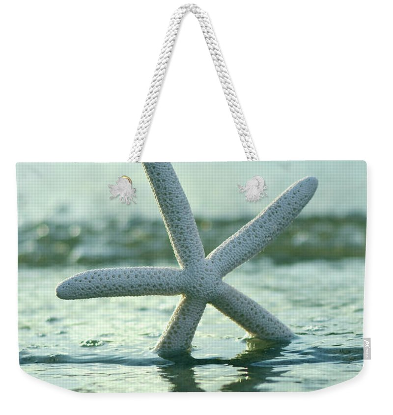 Laura Fasulo Weekender Tote Bag featuring the photograph Sea Star Vert by Laura Fasulo