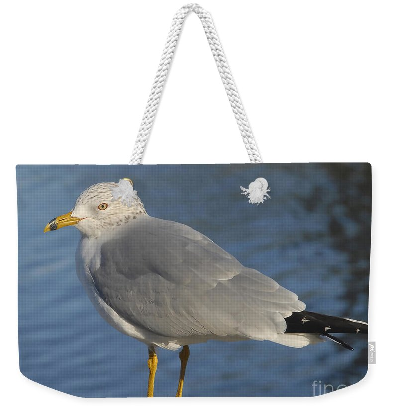 Seagull Weekender Tote Bag featuring the photograph Seagull by David Lee Thompson
