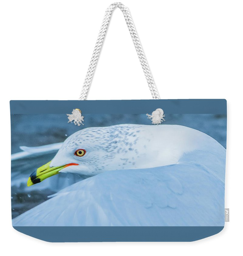20170128 Weekender Tote Bag featuring the photograph Seagull Departing Close-up by Jeff at JSJ Photography