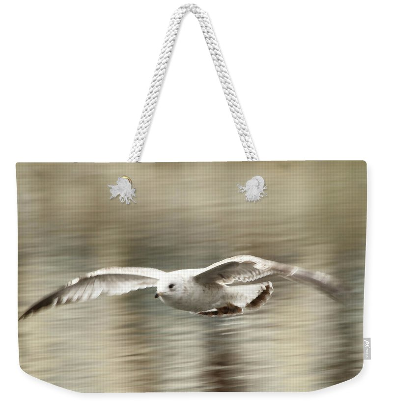 Seagull Weekender Tote Bag featuring the photograph Seagull Glide by Karol Livote