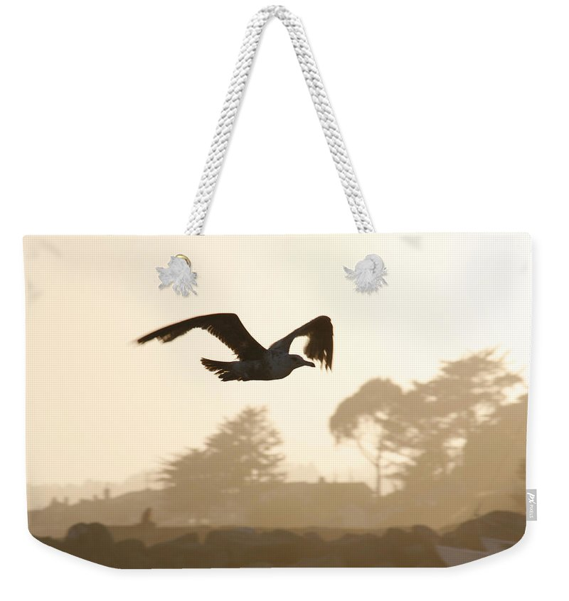 Bird Weekender Tote Bag featuring the photograph Seagull Sihlouette by Marilyn Hunt