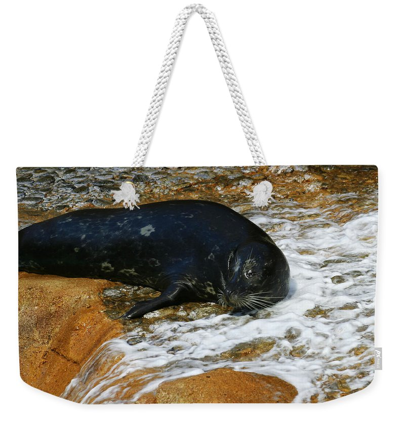 Seal Weekender Tote Bag featuring the photograph Seal by Anthony Jones