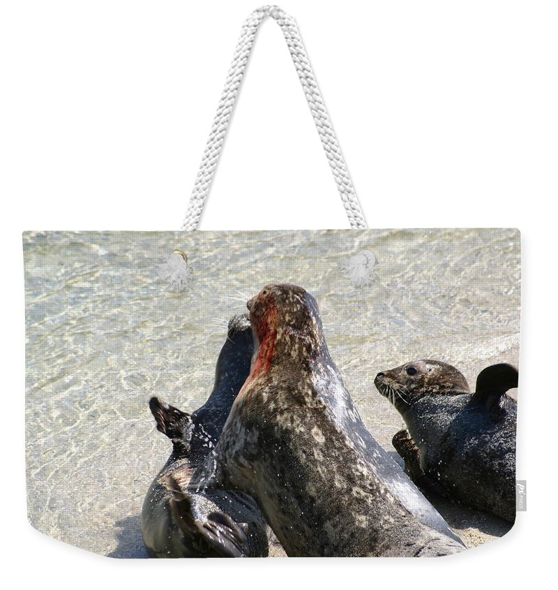 Seals Weekender Tote Bag featuring the photograph Seal Fight by Anthony Jones