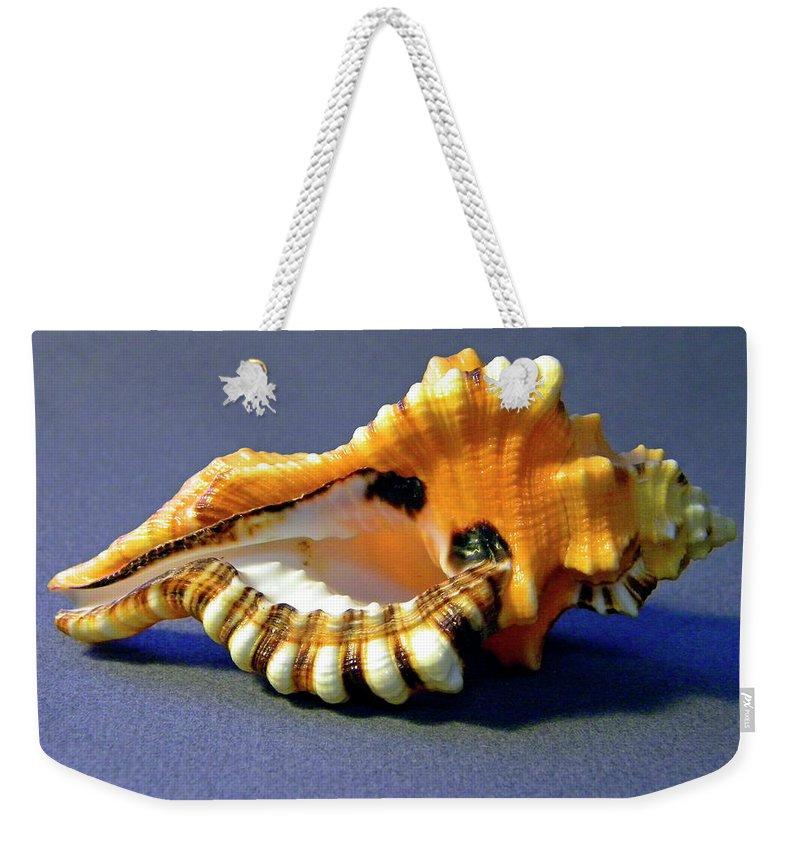 Frank Wilson Weekender Tote Bag featuring the photograph Seashell Cymatium Lotoium by Frank Wilson