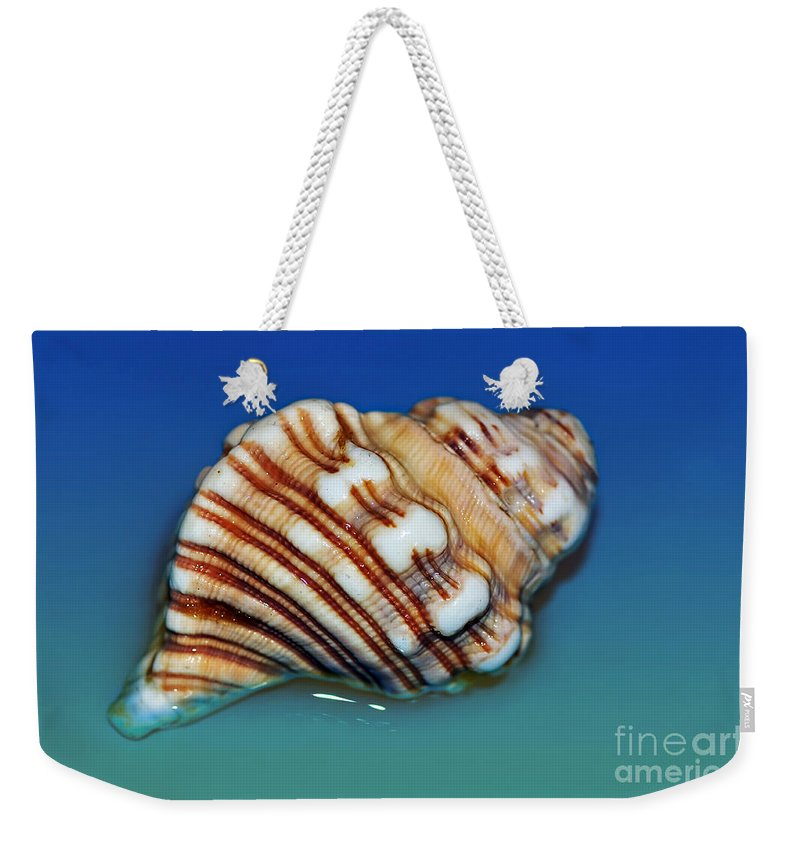Photography Weekender Tote Bag featuring the photograph Seashell Wall Art 1 by Kaye Menner