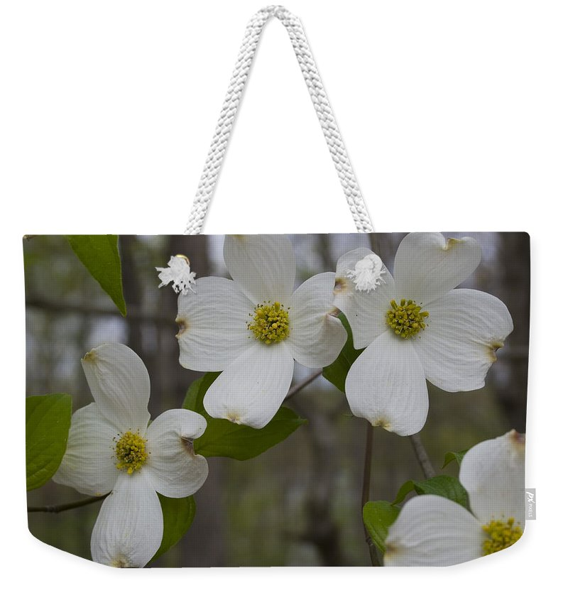 Flower Weekender Tote Bag featuring the photograph Season Of Dogwood by Andrei Shliakhau