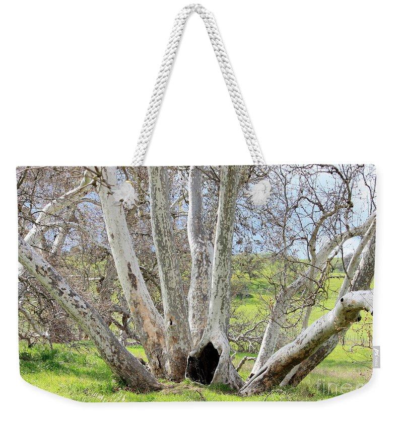 Tree Weekender Tote Bag featuring the photograph Secret Passageway by Carol Groenen