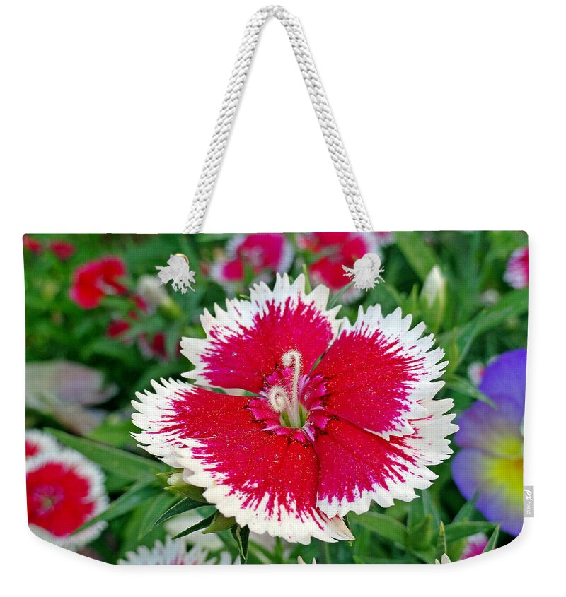 Dianthus Weekender Tote Bag featuring the photograph Sedona Dianthus by Robert Meyers-Lussier