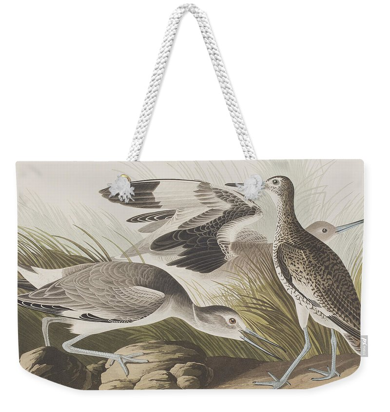 Audubon Weekender Tote Bag featuring the painting Semipalmated Snipe Or Willet by John James Audubon
