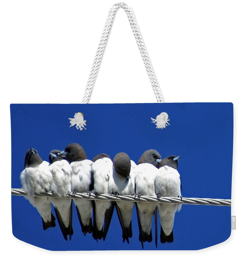 Animals Weekender Tote Bag featuring the photograph Seven Swallows Sitting by Holly Kempe
