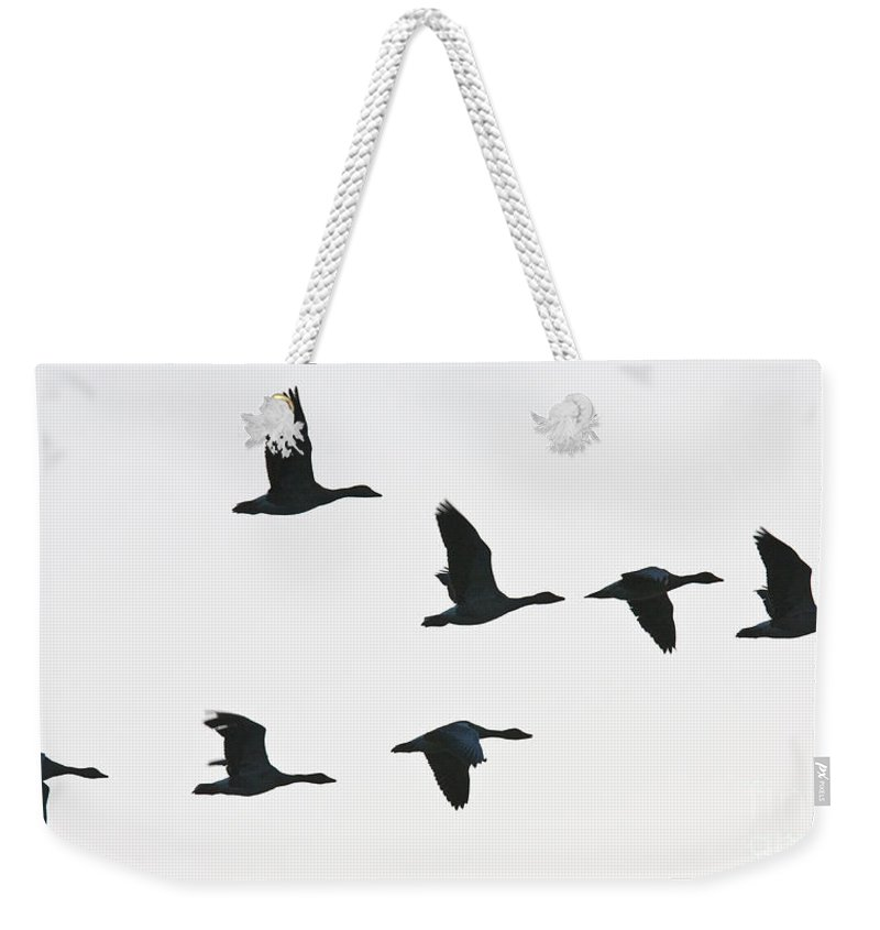 Geese Weekender Tote Bag featuring the photograph Sevenfold Geese by Casper Cammeraat