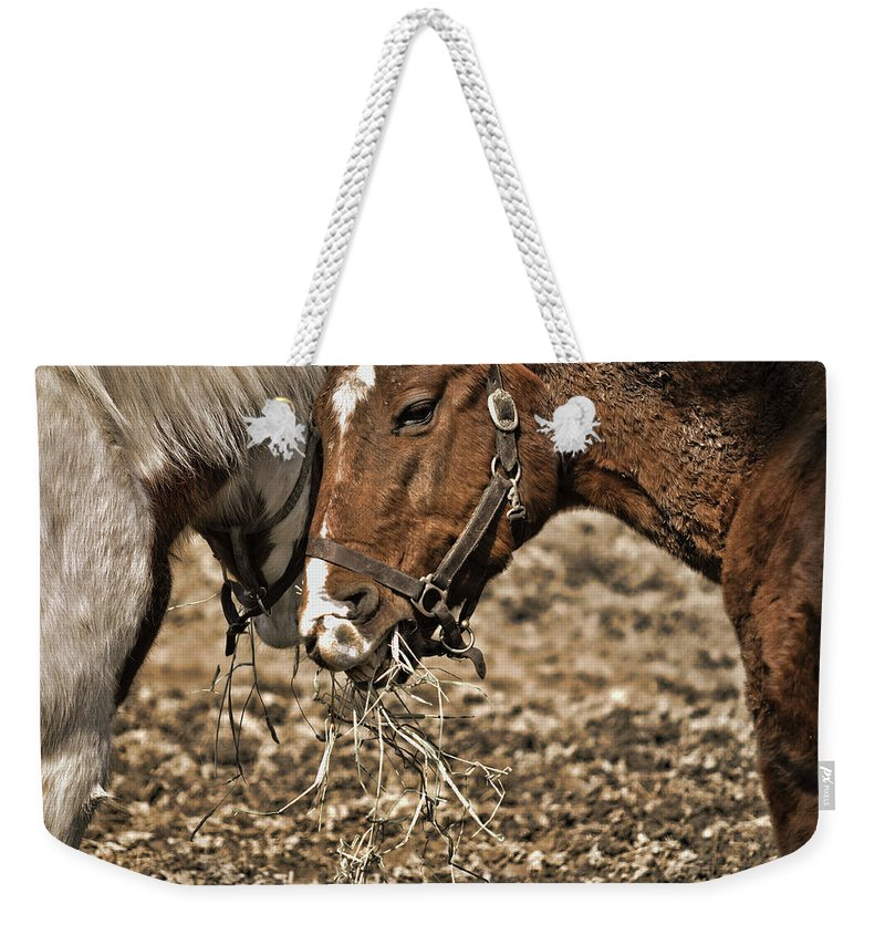 Horse Weekender Tote Bag featuring the photograph Sharing The Hay by JAMART Photography