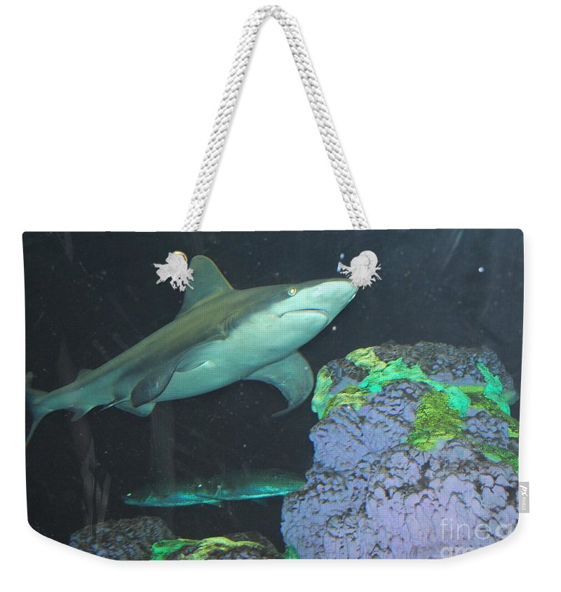 Shark Weekender Tote Bag featuring the photograph Shark by Jost Houk
