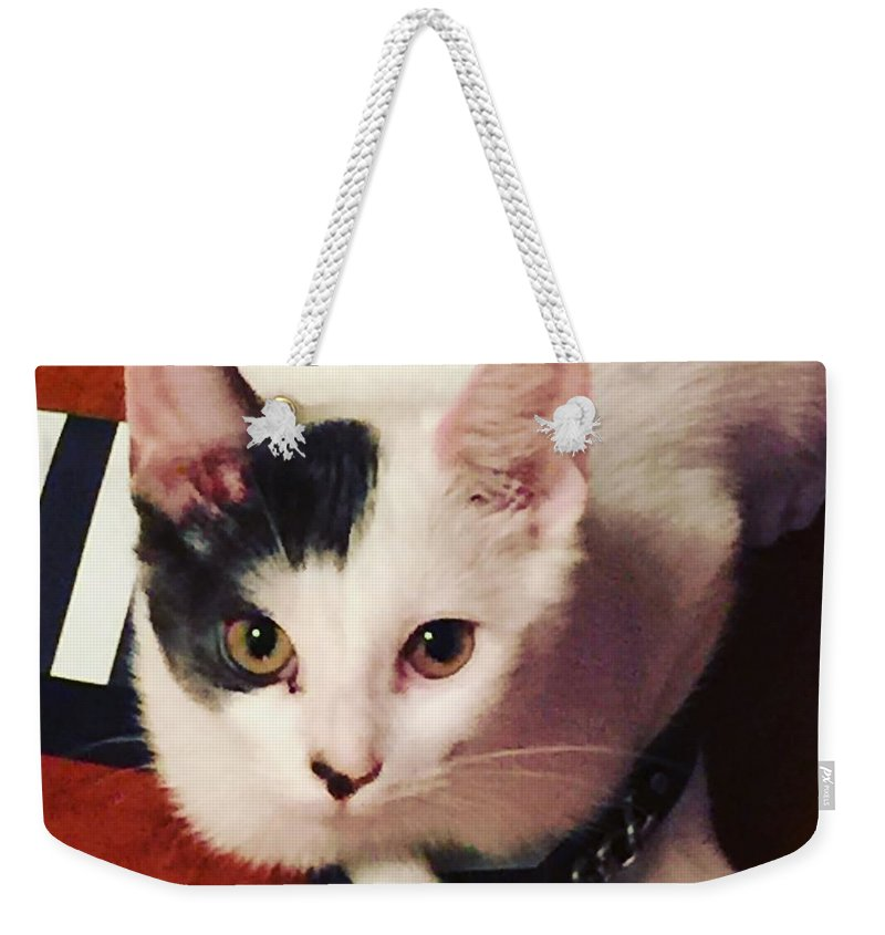 Shoes Weekender Tote Bag featuring the photograph Sharky Is Shoe Cat by Buffy Heslin