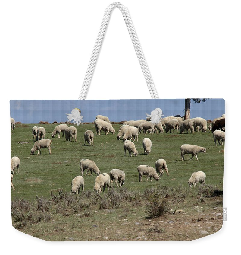 Sheep Weekender Tote Bag featuring the photograph Sheep Country by Jerry McElroy