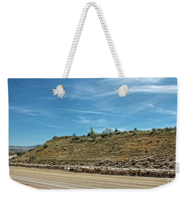 Herd Weekender Tote Bag featuring the photograph Sheep Drive by Robert Bales