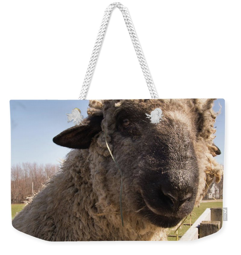 Sheep Weekender Tote Bag featuring the photograph Sheep Face 2 by Diane Schuler