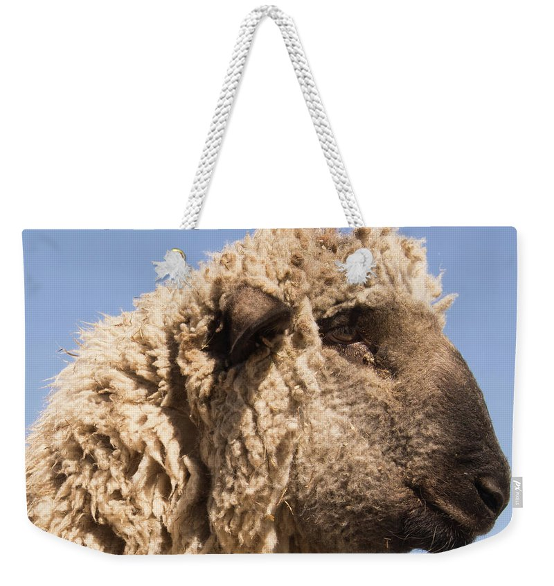 Sheep Weekender Tote Bag featuring the photograph Sheep In Profile by Diane Schuler