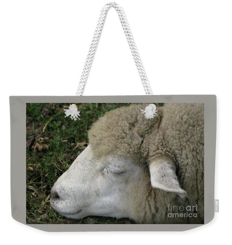 Sheep Weekender Tote Bag featuring the photograph Sheep Sleep by Ann Horn