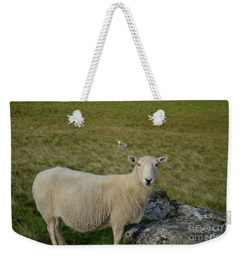 Sheep Weekender Tote Bag featuring the photograph Sheep Standing In The Field At Neist Point In Scotland by DejaVu Designs