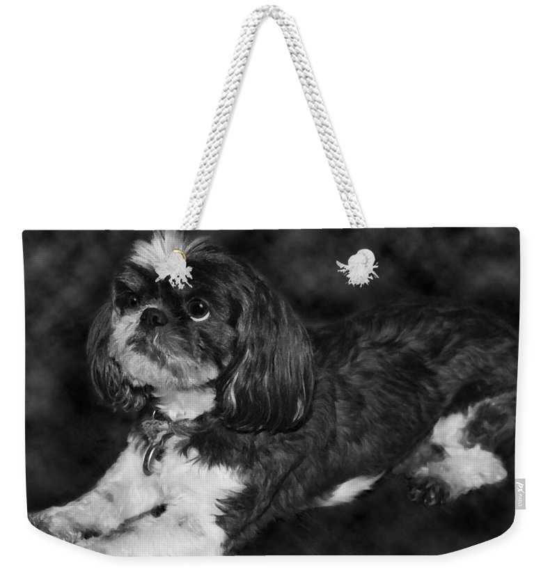 3scape Weekender Tote Bag featuring the painting Shih Tzu by Adam Romanowicz