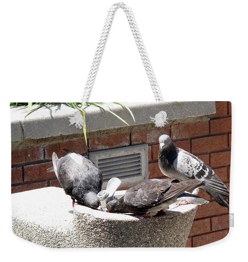 Pigeons Weekender Tote Bag featuring the photograph Shooo by Ian MacDonald
