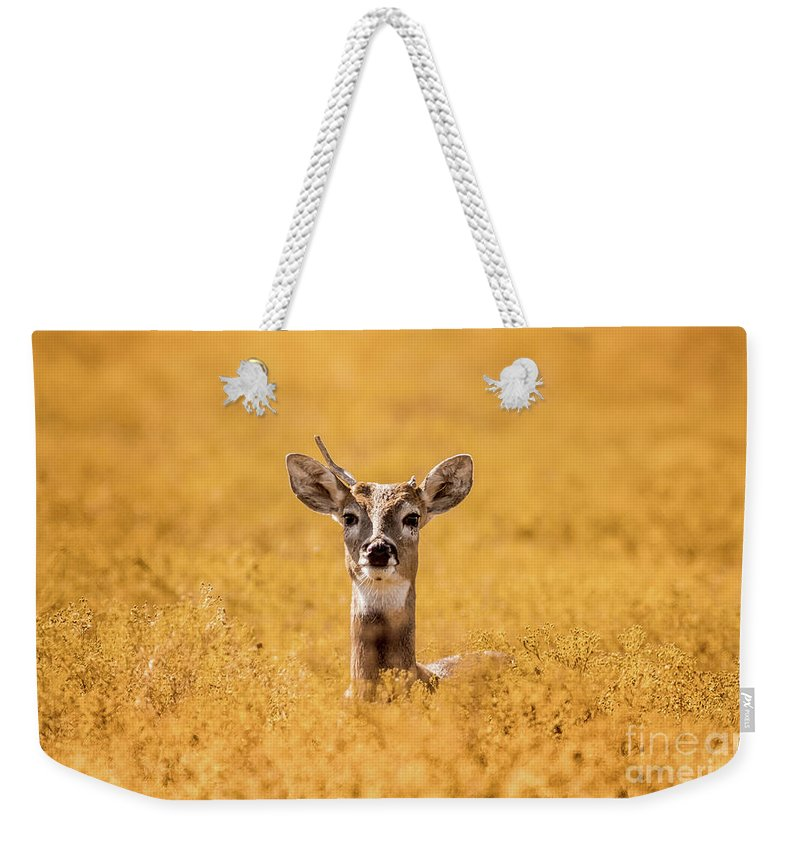 Buck Weekender Tote Bag featuring the photograph Shootin' High And Right Ed by Robert Frederick