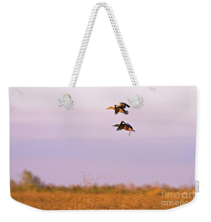 Ducks Weekender Tote Bag featuring the photograph Shoveler Pair by Scott Pellegrin