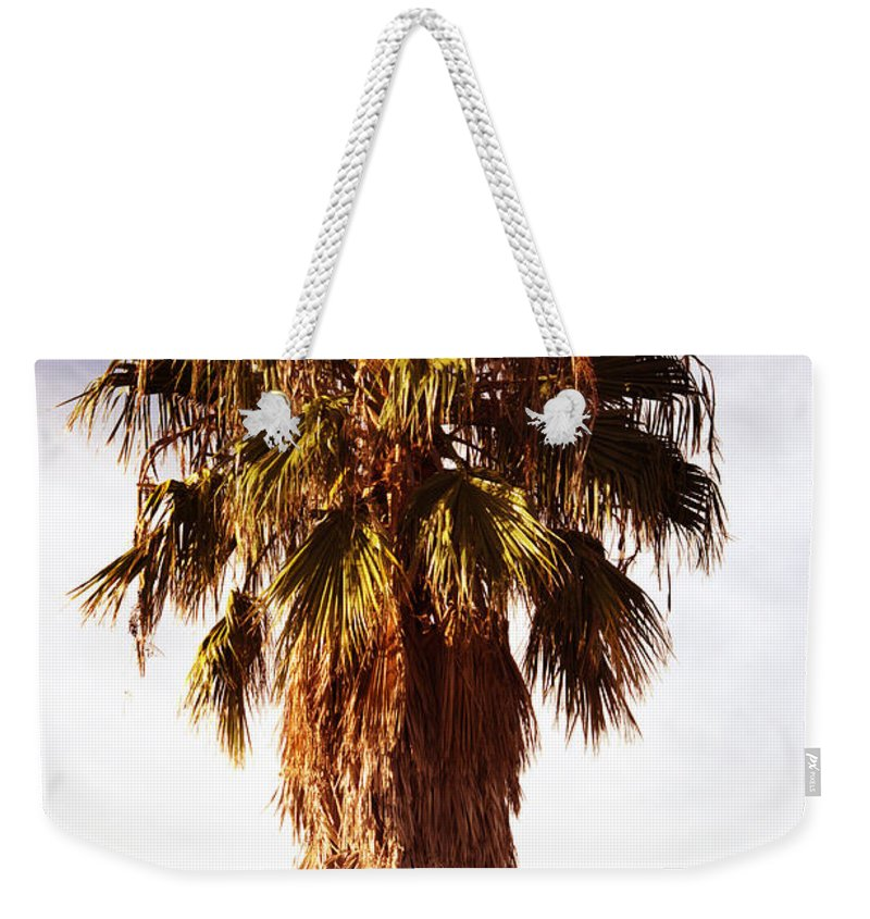 Palm Tree Weekender Tote Bag featuring the photograph Shrouded In The Past 1 by Marshall Barth