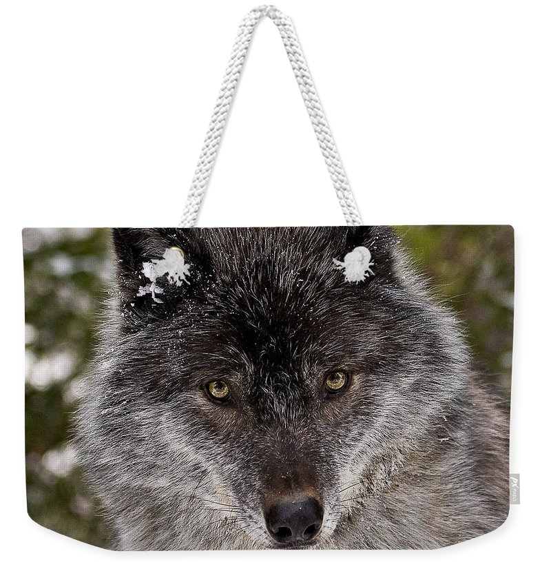 Wild Weekender Tote Bag featuring the photograph Shy by Colette Panaioti
