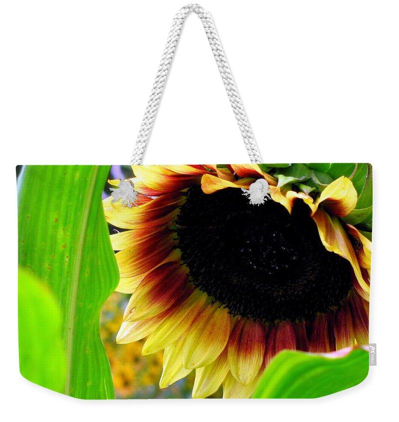Sun Flower Weekender Tote Bag featuring the photograph Shy by Deborah Crew-Johnson
