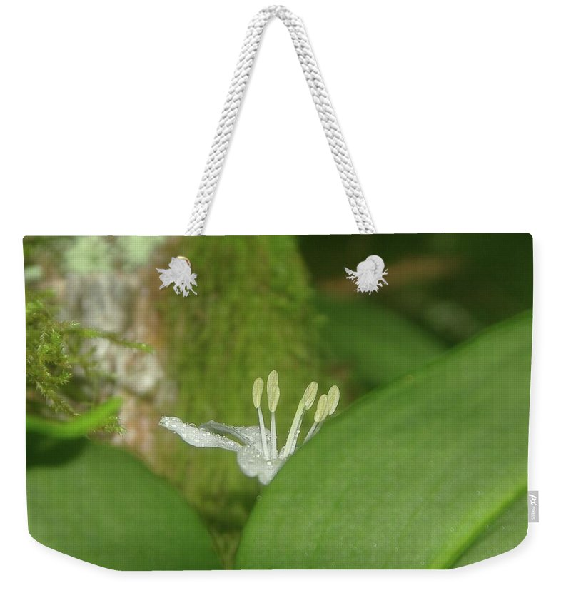 Flowers Weekender Tote Bag featuring the photograph Shy Flower by Jeff Swan