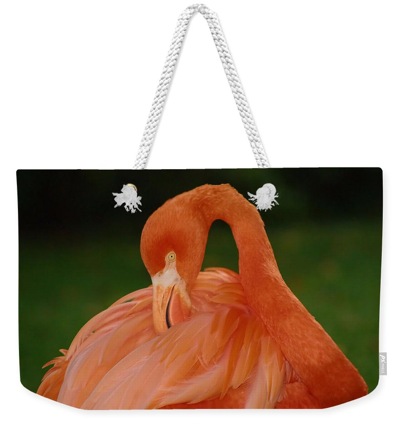 Flamingo Weekender Tote Bag featuring the photograph shy by Gaby Swanson
