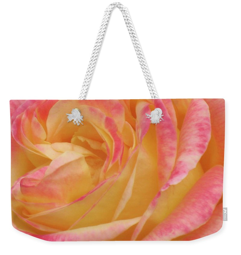Close-up Photo Photography Flower Plant Yellow Rose Pink Weekender Tote Bag featuring the photograph Shy Yellow Rose by Christina Geiger