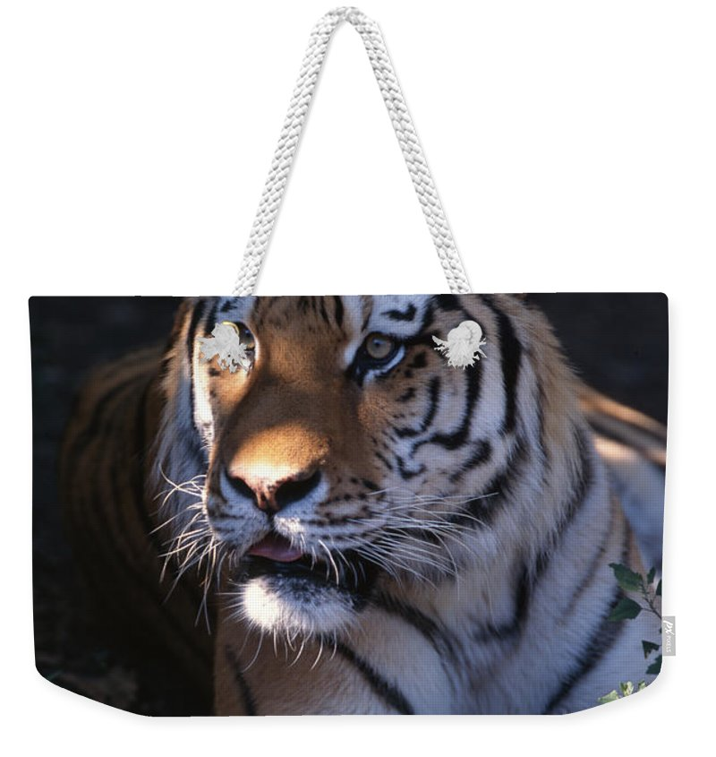 Tiger Weekender Tote Bag featuring the photograph Siberian Tiger Executive Portrait by John Harmon