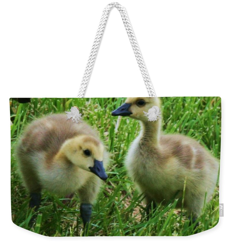 Nature Weekender Tote Bag featuring the photograph Siblings by Angus Hooper Iii