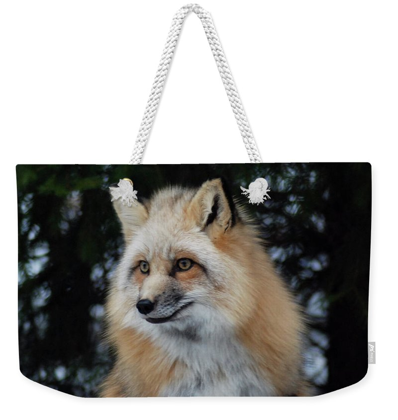Fox Weekender Tote Bag featuring the photograph Sierra's Profile by Richard Bryce and Family