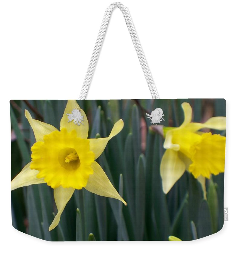 Daffodil Weekender Tote Bag featuring the photograph Sign Of Spring by Betty Northcutt