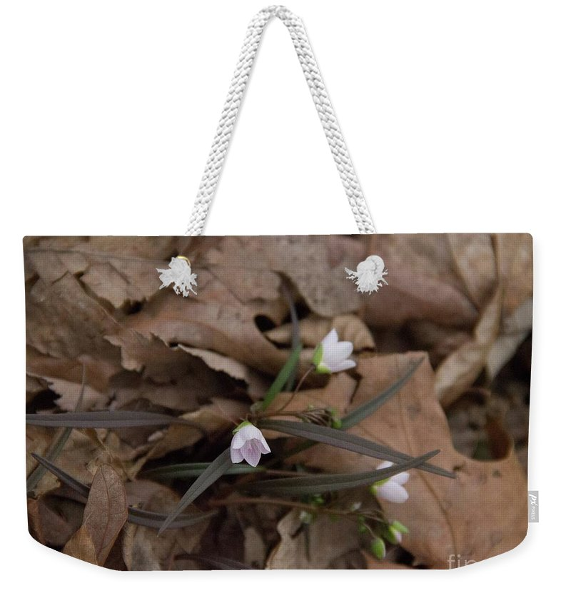 Nature Walk Weekender Tote Bag featuring the photograph Sign Of Spring by Rebecca Pavelka