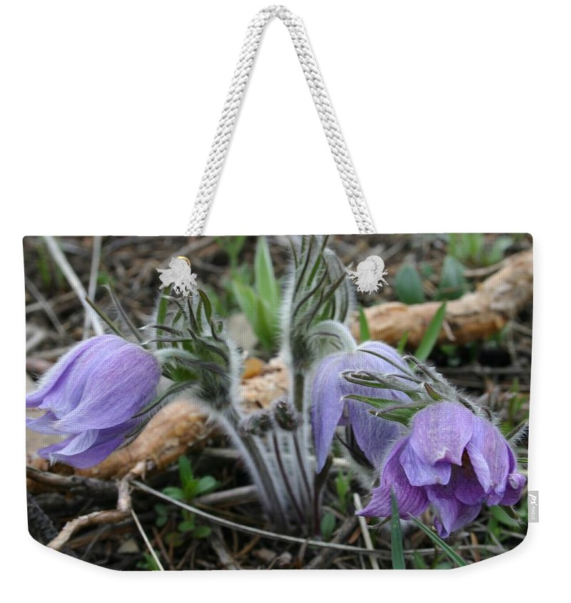 Pasque Flower Weekender Tote Bag featuring the photograph Signs Of Spring by Nelson Strong