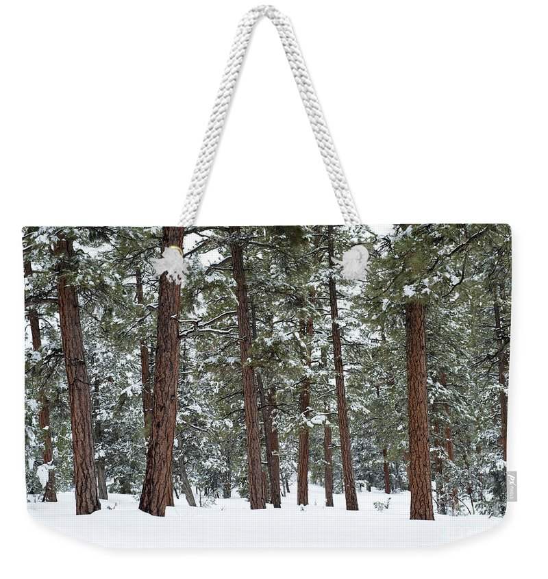 Southwest Weekender Tote Bag featuring the photograph Silence Of The Woods by Sandra Bronstein
