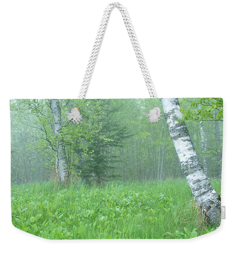 Landscape Weekender Tote Bag featuring the photograph Silent Birch by Bill Morgenstern