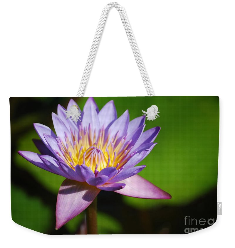 Nymphaea Weekender Tote Bag featuring the photograph Single Purple Water Lily Number One by Heather Kirk
