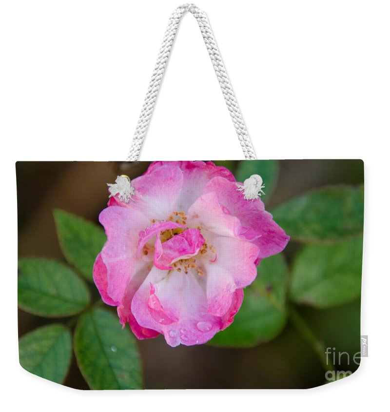 Single Weekender Tote Bag featuring the photograph Single Rose 2 by Andrea Anderegg