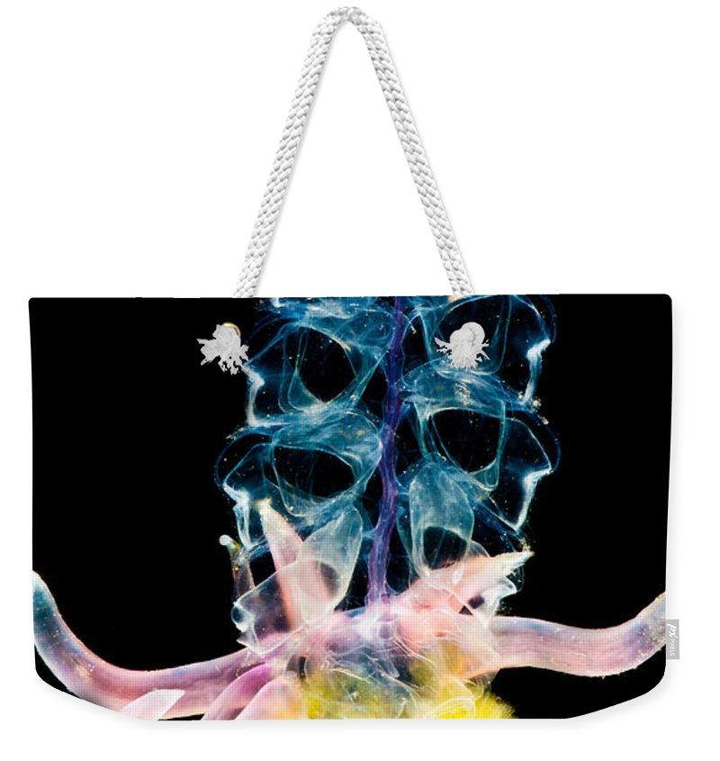 Siphonophore Weekender Tote Bags