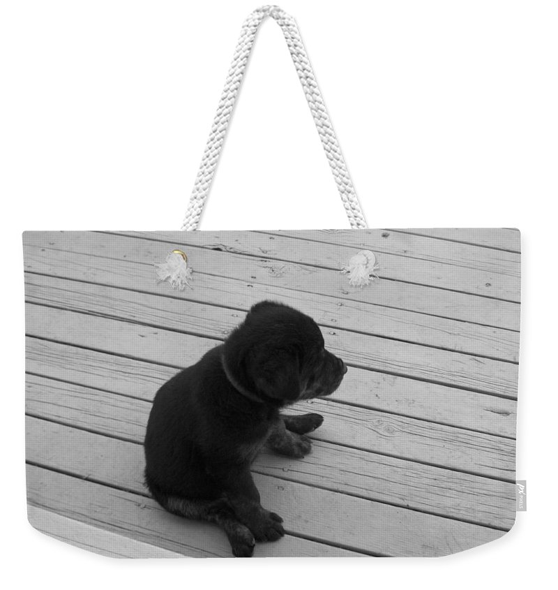 Puppy Dog Baby Relaxing Patience Black And White Photography Cute Weekender Tote Bag featuring the photograph Sit And Think by Andrea Lawrence