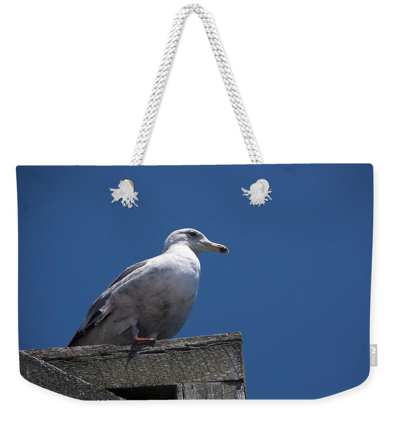 Dock Weekender Tote Bag featuring the photograph Sitting By The Dock Of The Bay by Steven Natanson
