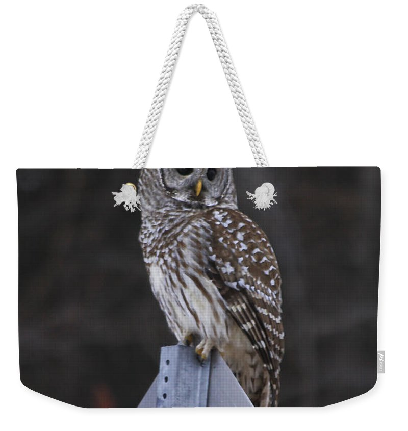 Bird Weekender Tote Bag featuring the photograph Sitting On The Sign Post by Deborah Benoit