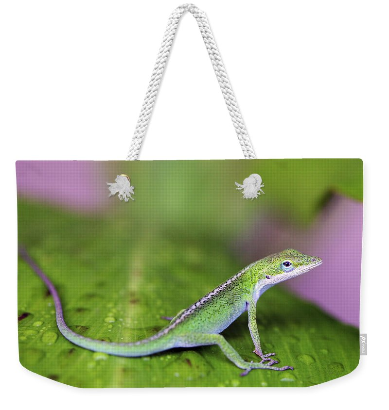 Lizard Weekender Tote Bag featuring the photograph Sitting Pretty by Marilyn Hunt